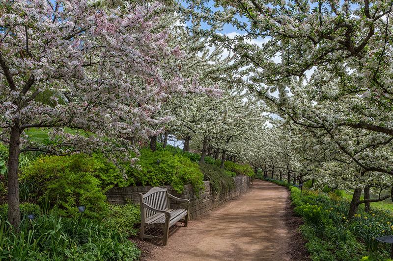 Lakeside Garden - Crabapples in Bloom