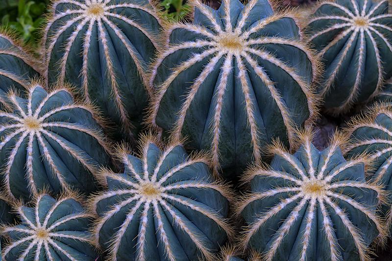 Cactus Patterns