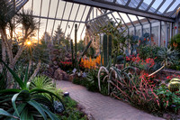 Sunset in the Arid Greenhouse