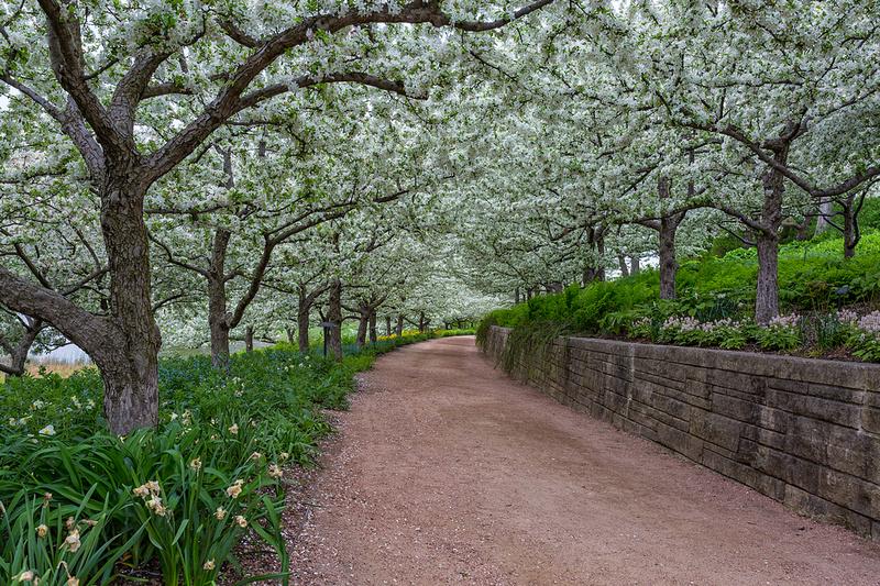 Crabapple Path